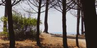 La plaine orientale Corse inattendue