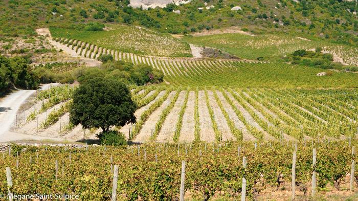 corse, vignoble, vins